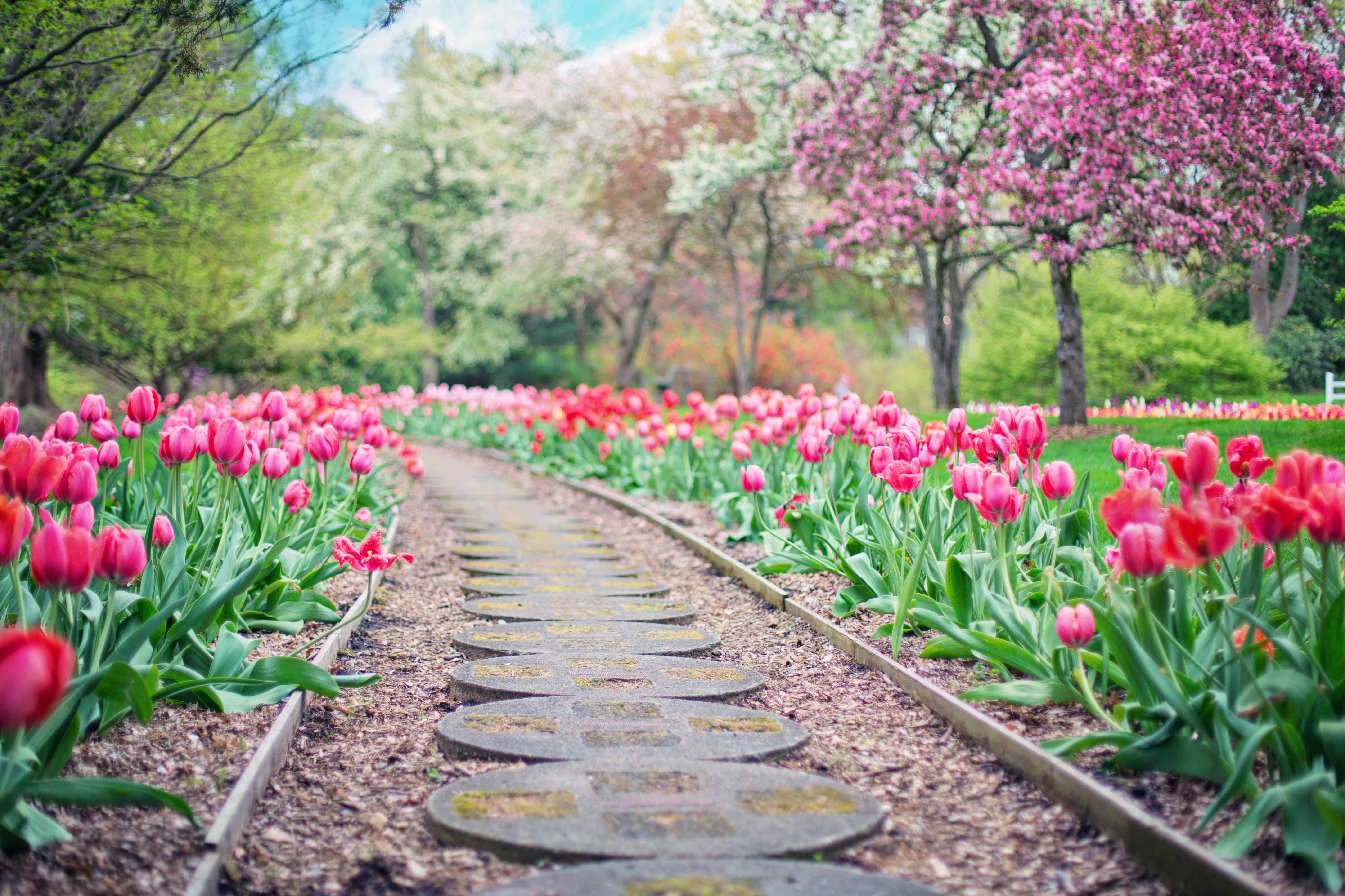 Spring Statement 2019 Prospero Accounting Ltd